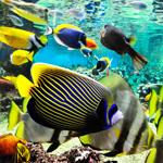 Aquarium Mare Nostrum - Herault 34