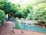 parc aux oiseaux dans l ain