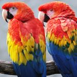 Jardin aux oiseaux